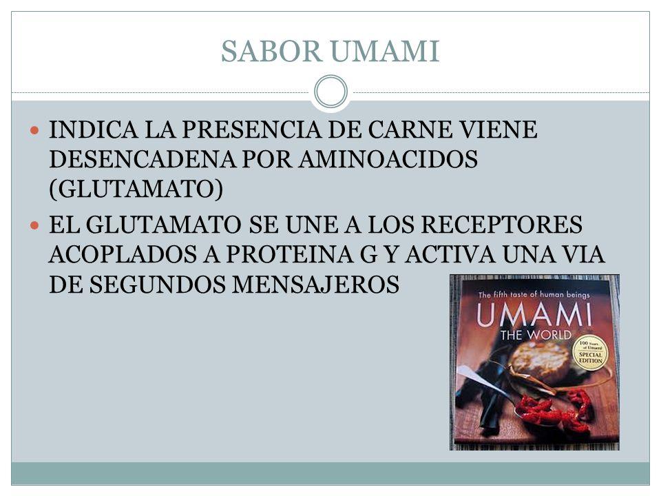 SABOR UMAMI INDICA LA PRESENCIA DE CARNE VIENE DESENCADENA POR AMINOACIDOS (GLUTAMATO)