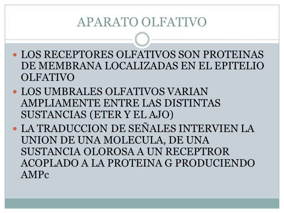 APARATO OLFATIVO LOS RECEPTORES OLFATIVOS SON PROTEINAS DE MEMBRANA LOCALIZADAS EN EL EPITELIO OLFATIVO.
