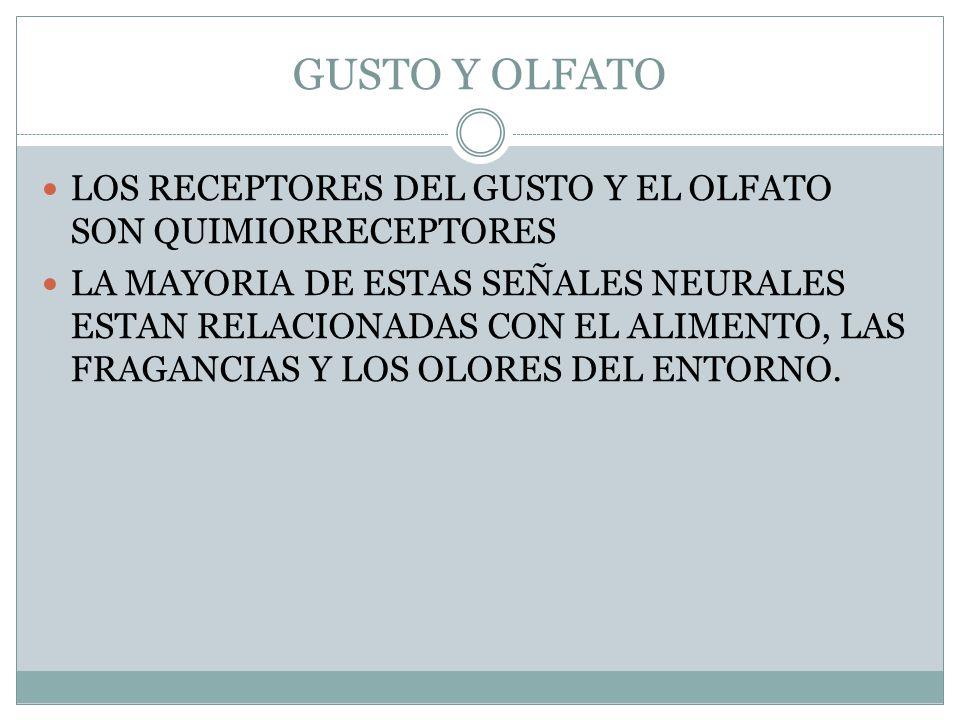 GUSTO Y OLFATO LOS RECEPTORES DEL GUSTO Y EL OLFATO SON QUIMIORRECEPTORES.