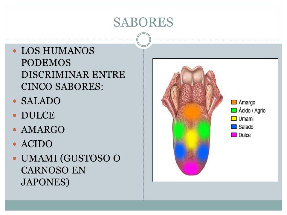 SABORES LOS HUMANOS PODEMOS DISCRIMINAR ENTRE CINCO SABORES: SALADO