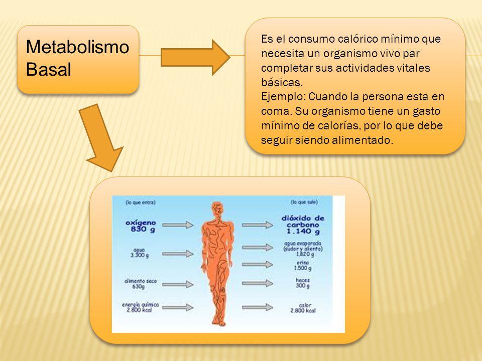 d Es el consumo calórico mínimo que necesita un organismo vivo par completar sus actividades vitales básicas.