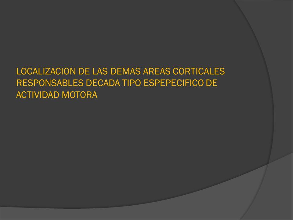 LOCALIZACION DE LAS DEMAS AREAS CORTICALES RESPONSABLES DECADA TIPO ESPEPECIFICO DE ACTIVIDAD MOTORA
