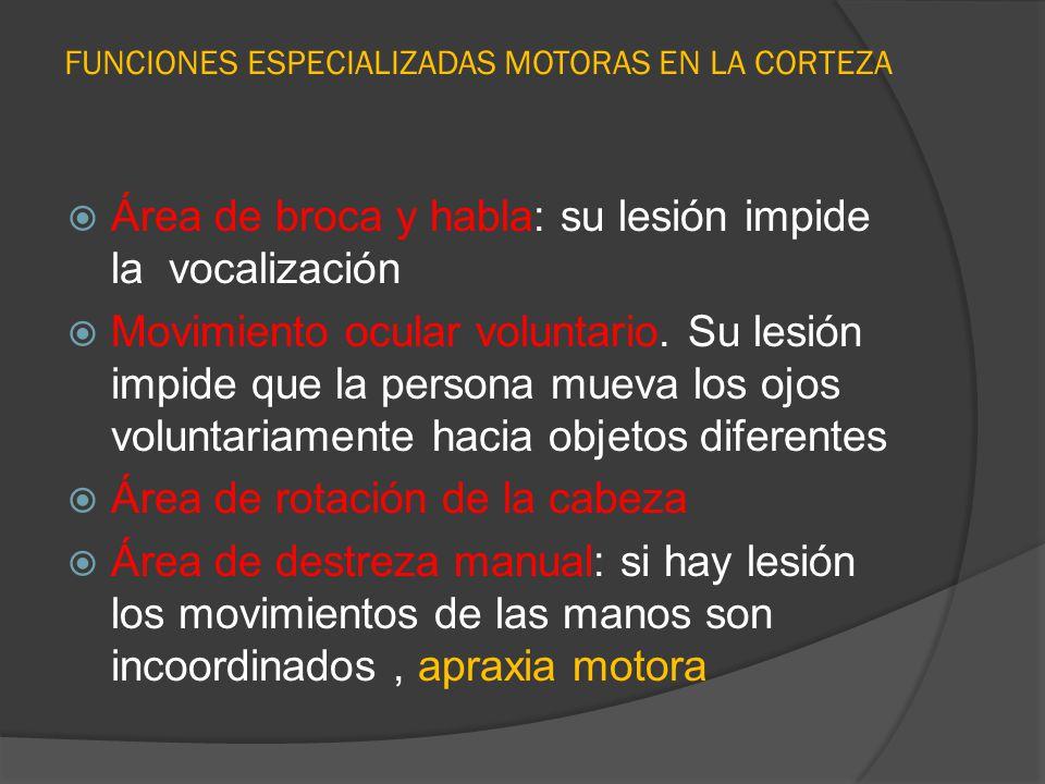 FUNCIONES ESPECIALIZADAS MOTORAS EN LA CORTEZA