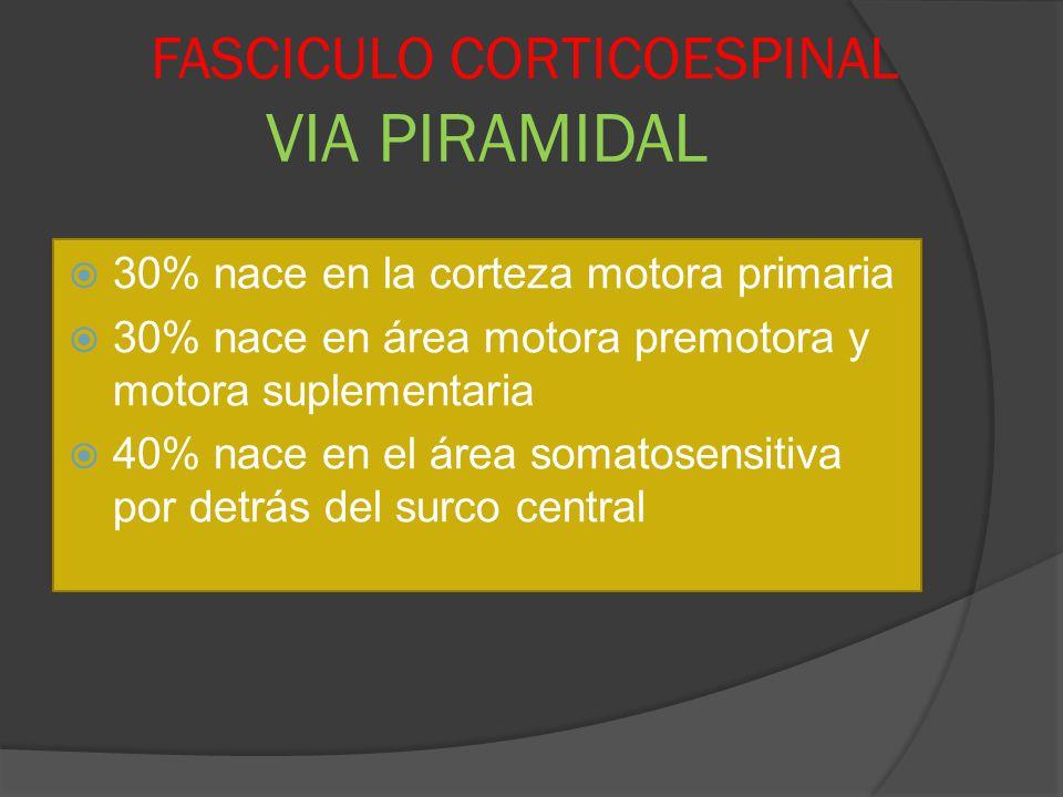 FASCICULO CORTICOESPINAL VIA PIRAMIDAL