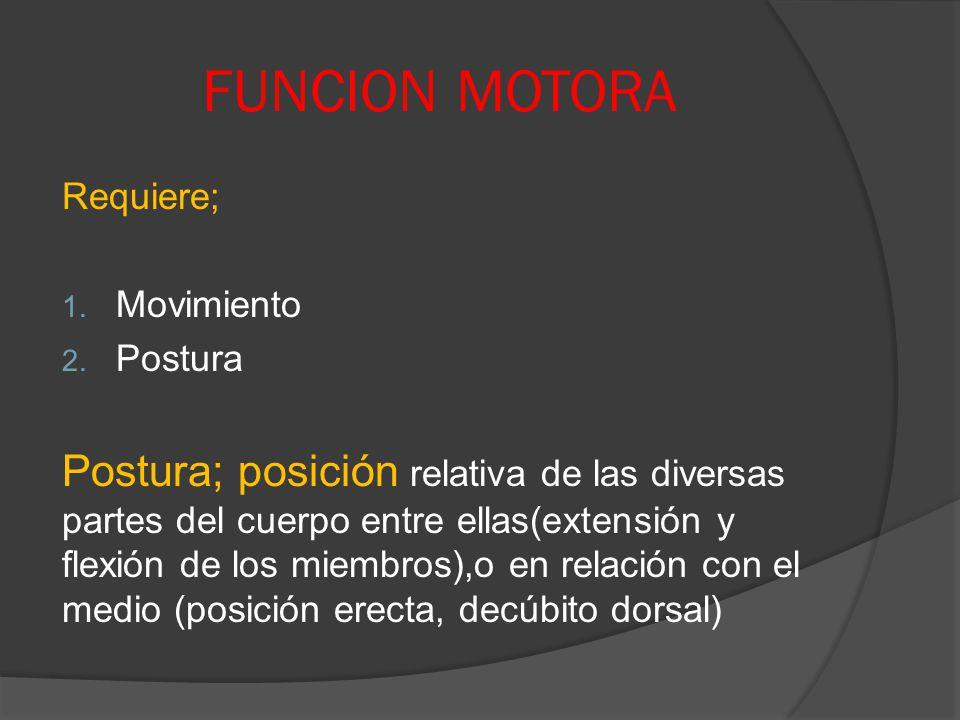 FUNCION MOTORA Requiere; Movimiento. Postura.