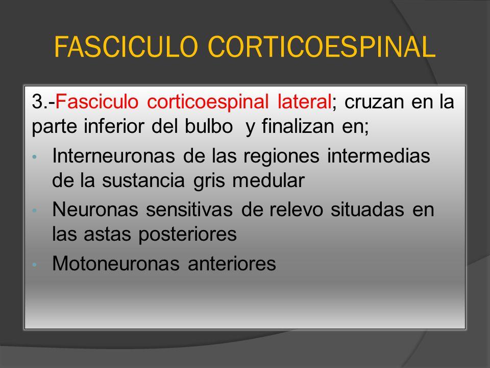 FASCICULO CORTICOESPINAL