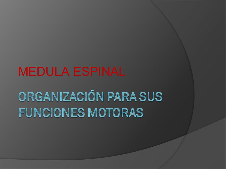ORGANIZACIÓN PARA SUS FUNCIONES MOTORAS