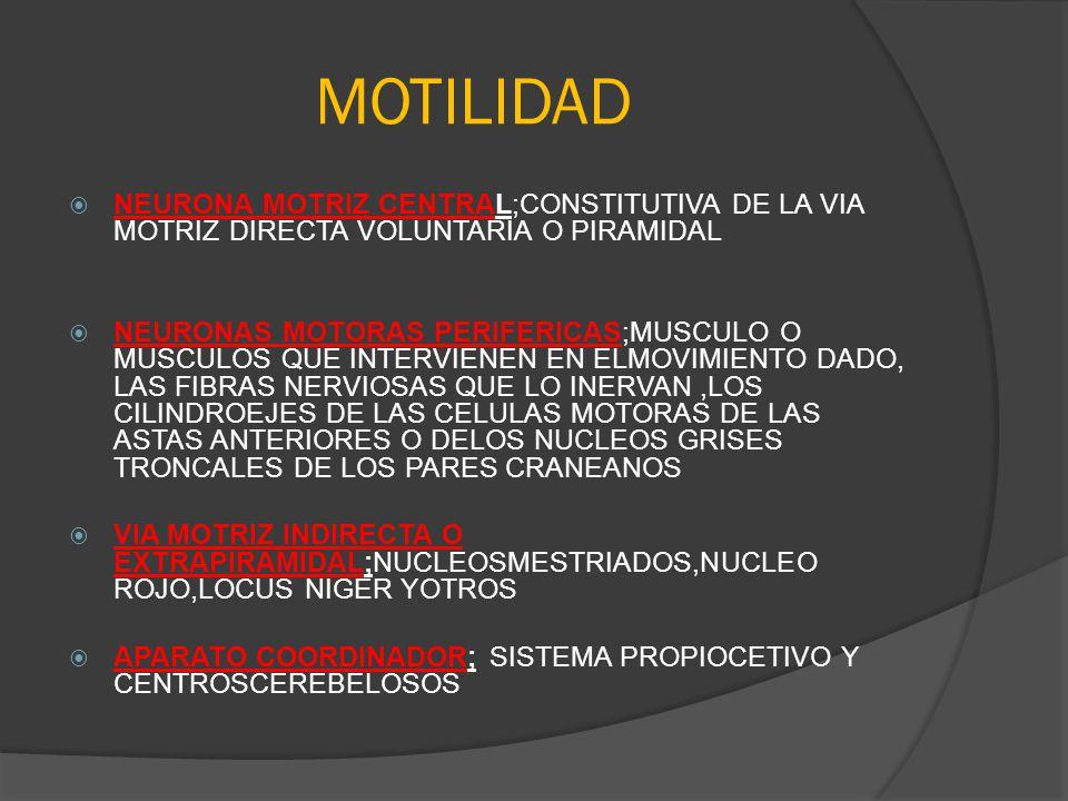 MOTILIDAD NEURONA MOTRIZ CENTRAL;CONSTITUTIVA DE LA VIA MOTRIZ DIRECTA VOLUNTARIA O PIRAMIDAL.