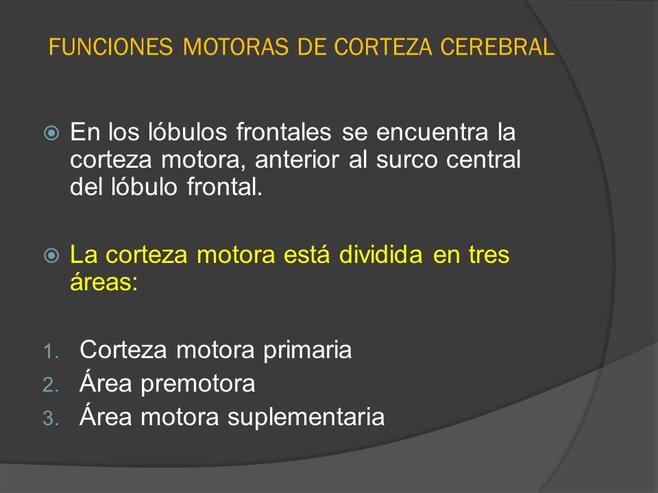 FUNCIONES MOTORAS DE CORTEZA CEREBRAL