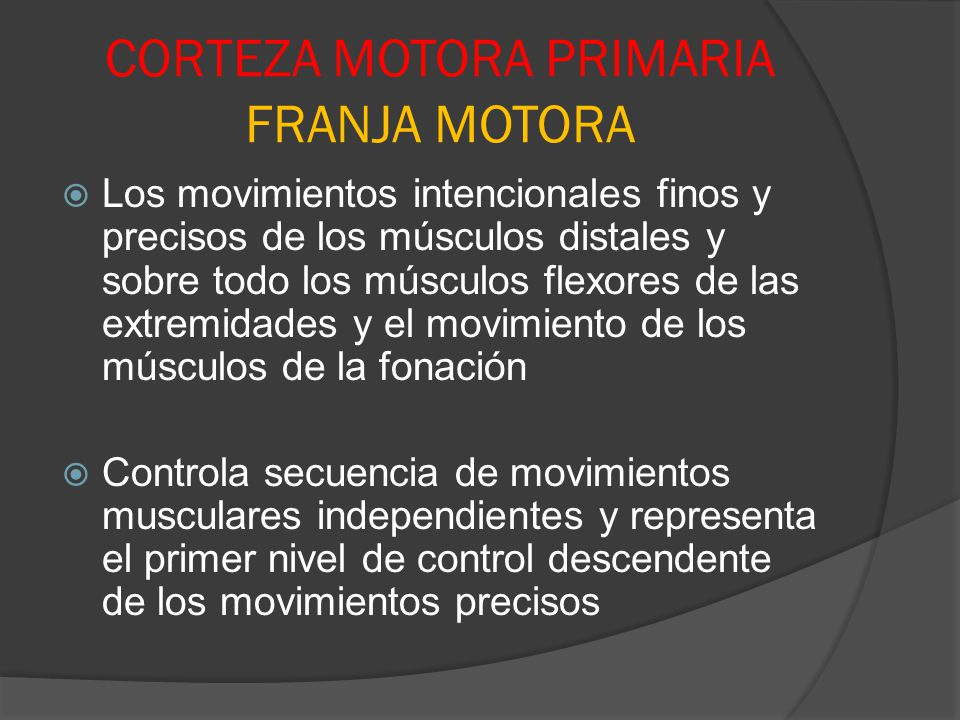 CORTEZA MOTORA PRIMARIA FRANJA MOTORA