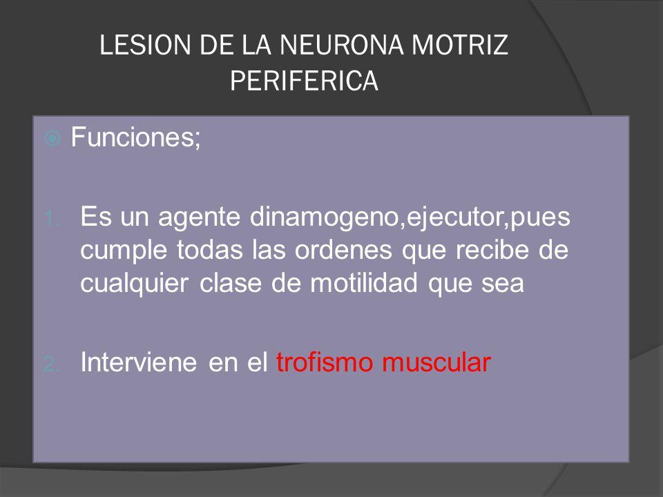 LESION DE LA NEURONA MOTRIZ PERIFERICA