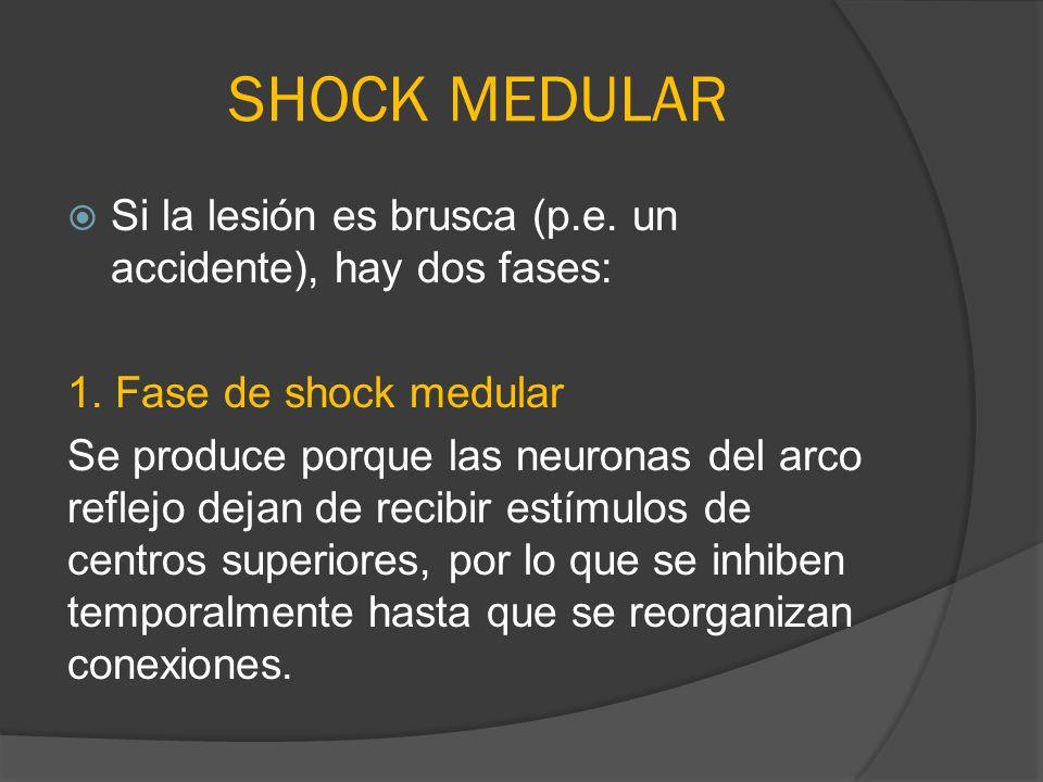 SHOCK MEDULAR Si la lesión es brusca (p.e. un accidente), hay dos fases: 1. Fase de shock medular.