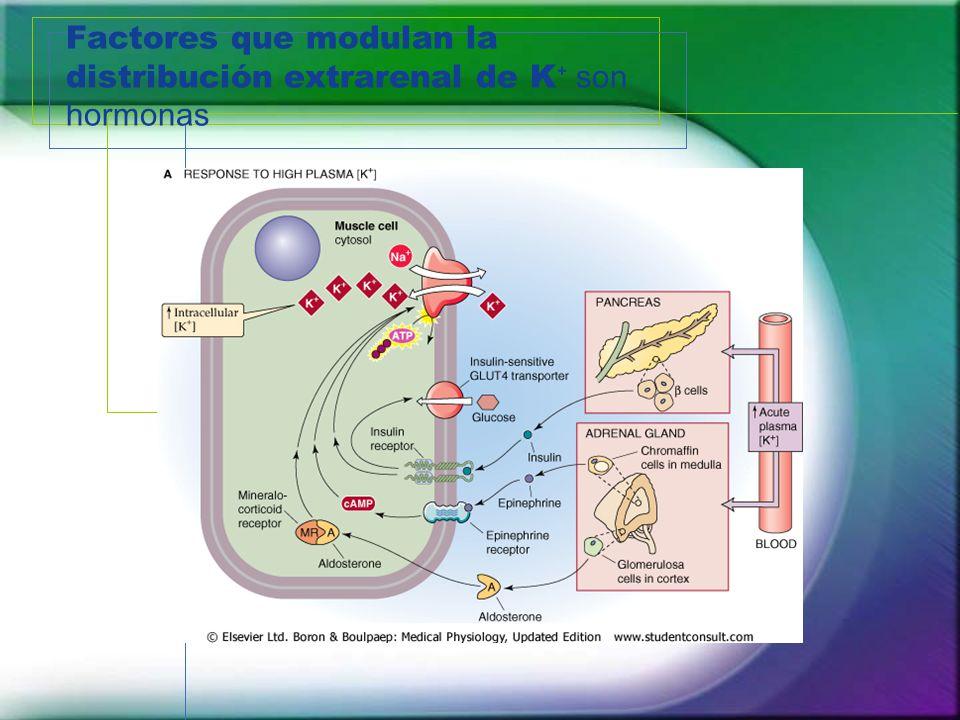 Factores que modulan la distribución extrarenal de K⁺ son hormonas
