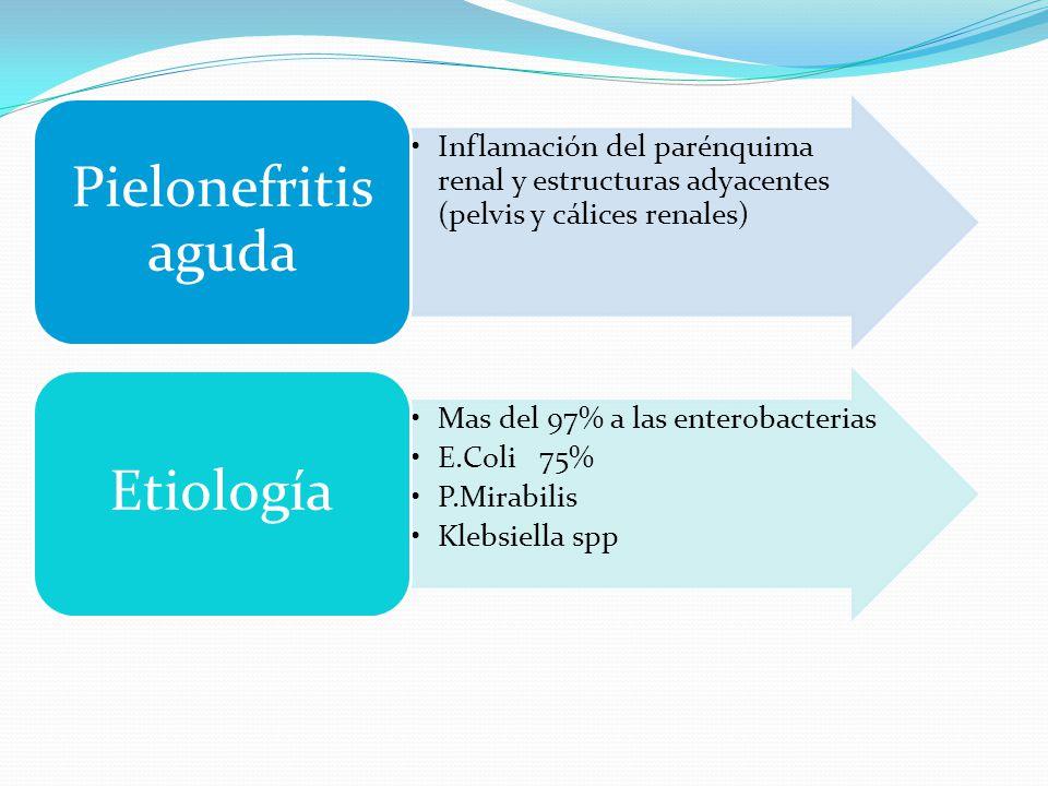 Pielonefritis aguda Inflamación del parénquima renal y estructuras adyacentes (pelvis y cálices renales)
