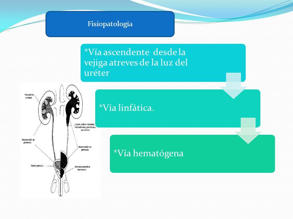 Fisiopatología *Vía ascendente desde la vejiga atreves de la luz del uréter.