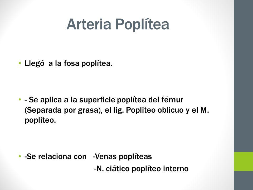 Arteria Poplítea Llegó a la fosa poplítea.