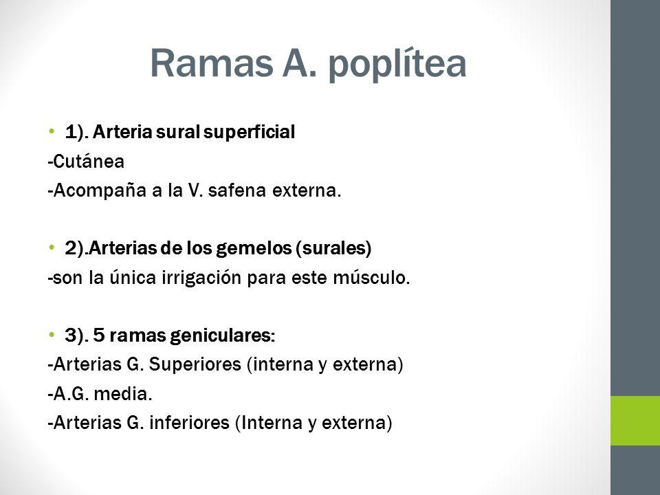 Ramas A. poplítea 1). Arteria sural superficial -Cutánea