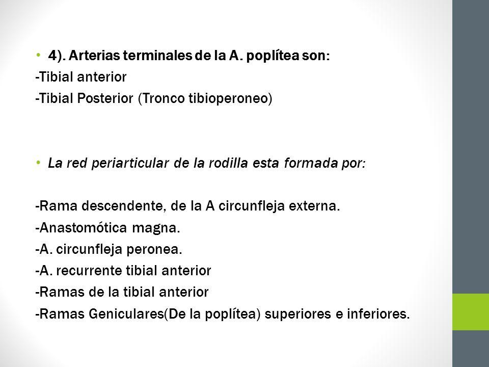 4). Arterias terminales de la A. poplítea son: