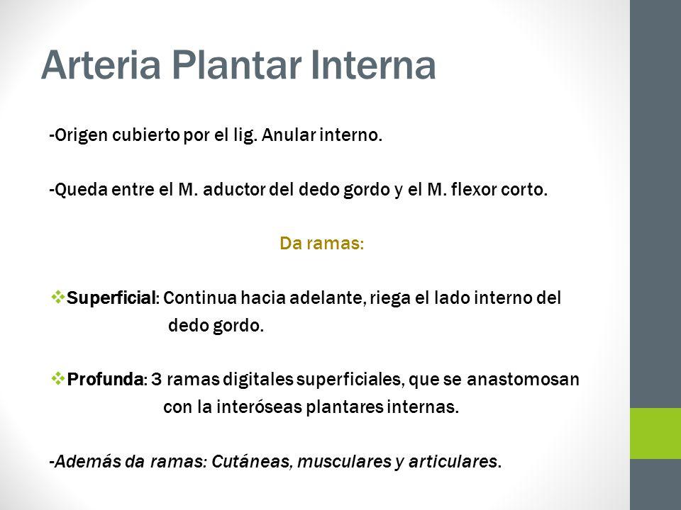 Arteria Plantar Interna