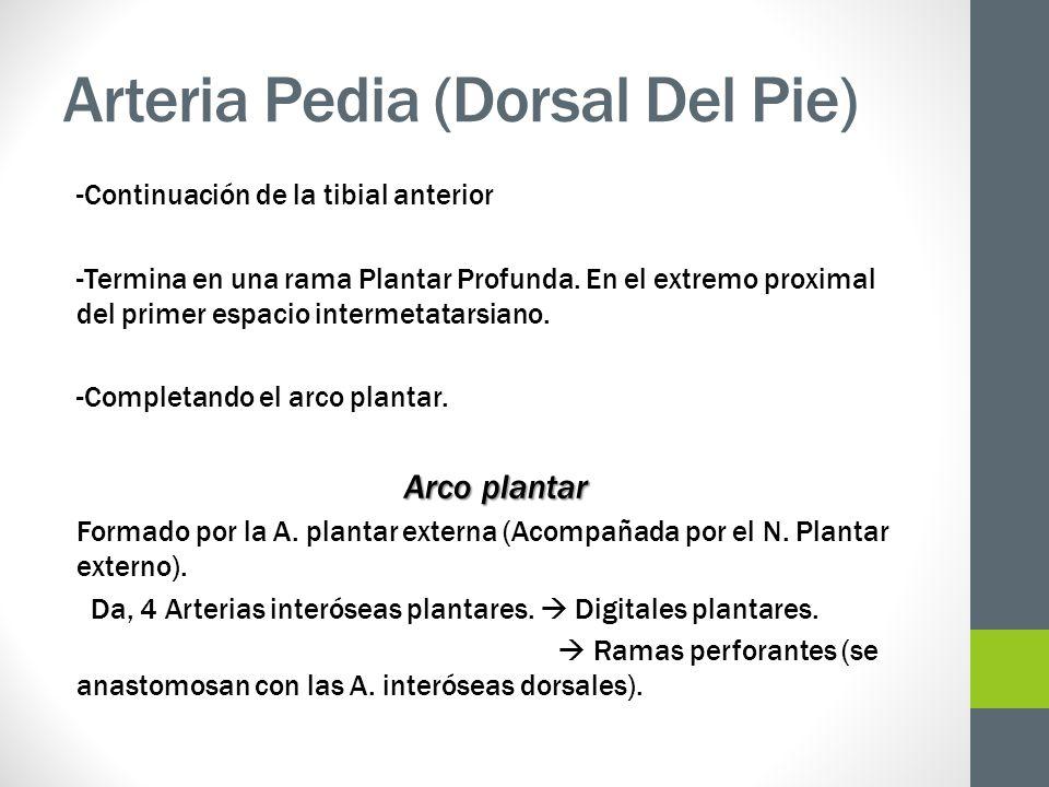 Arteria Pedia (Dorsal Del Pie)