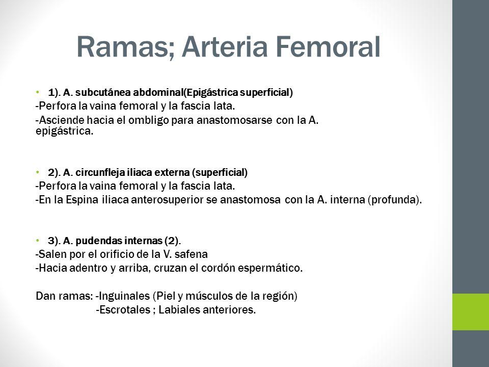 Ramas; Arteria Femoral