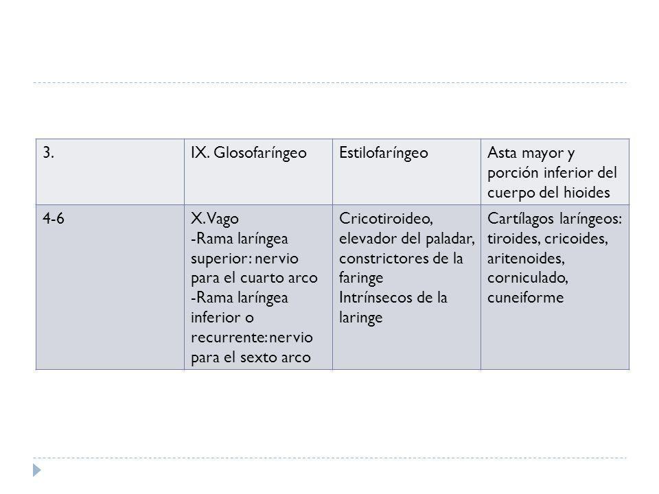 3. IX. Glosofaríngeo. Estilofaríngeo. Asta mayor y porción inferior del cuerpo del hioides. 4-6.