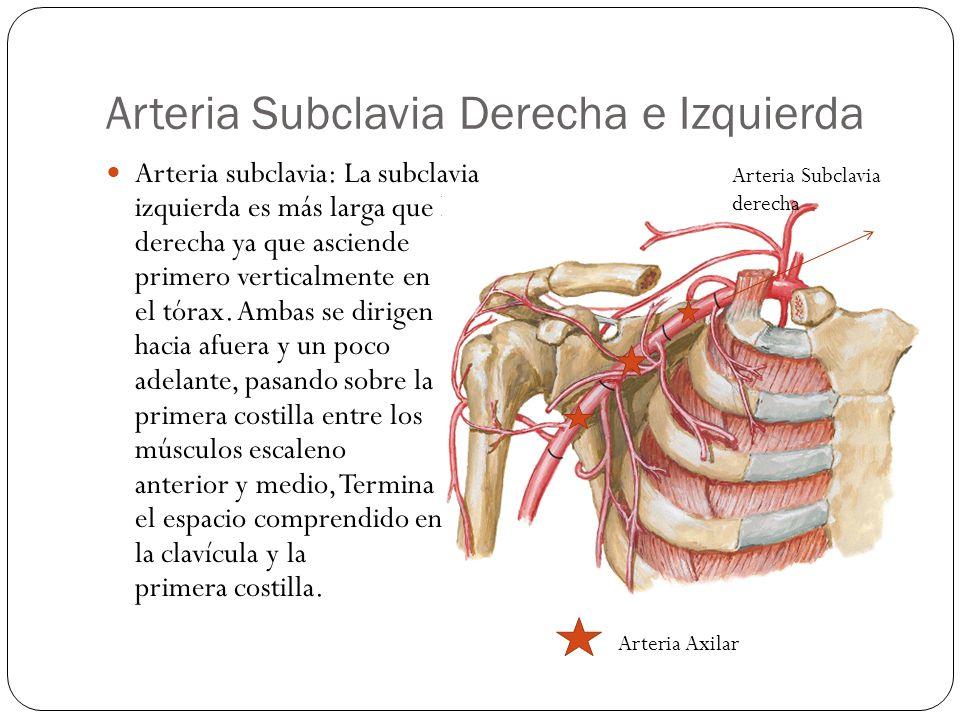 Arteria Subclavia Derecha e Izquierda
