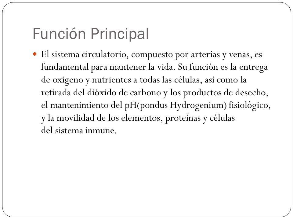 Función Principal