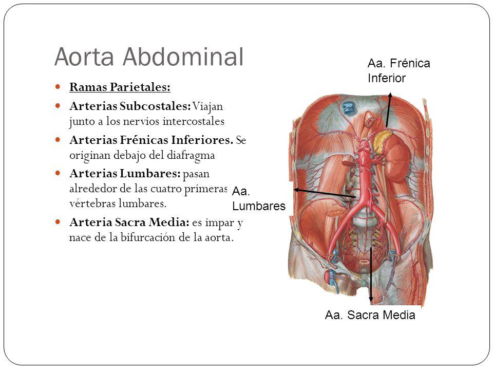 Aorta Abdominal Ramas Parietales: