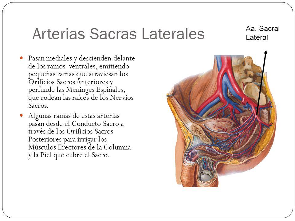 Arterias Sacras Laterales