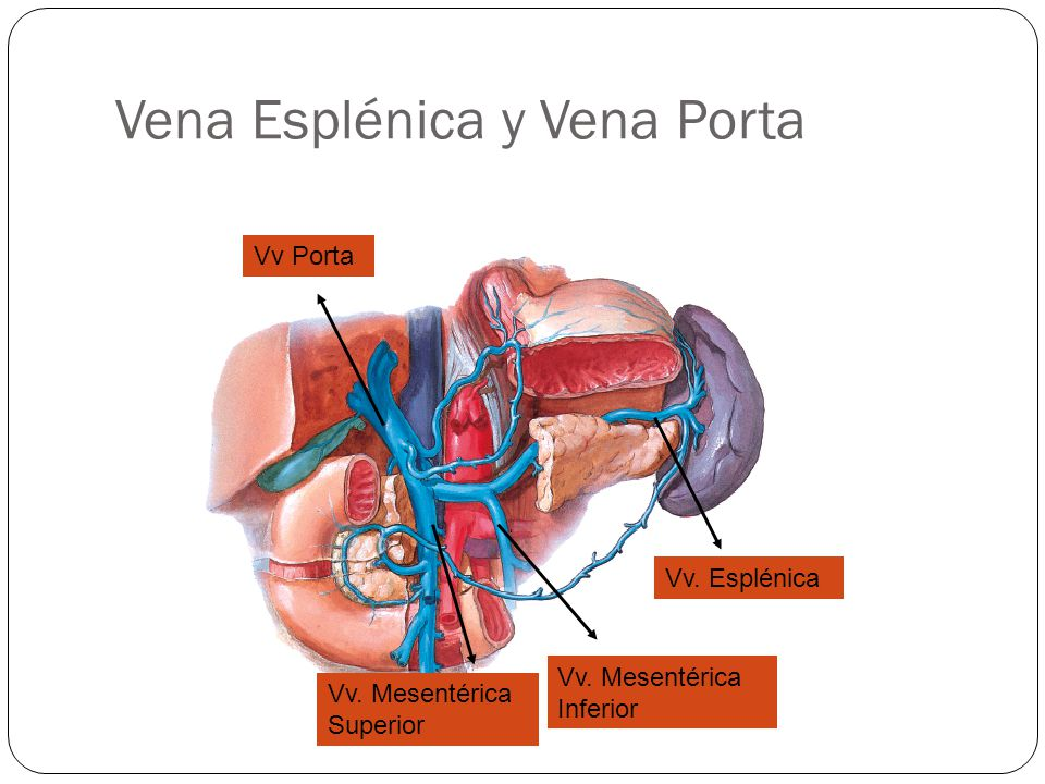 Vena Esplénica y Vena Porta