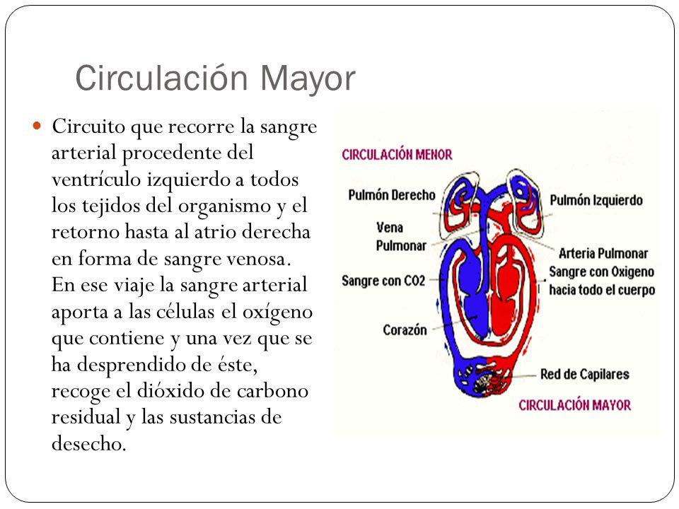Circulación Mayor
