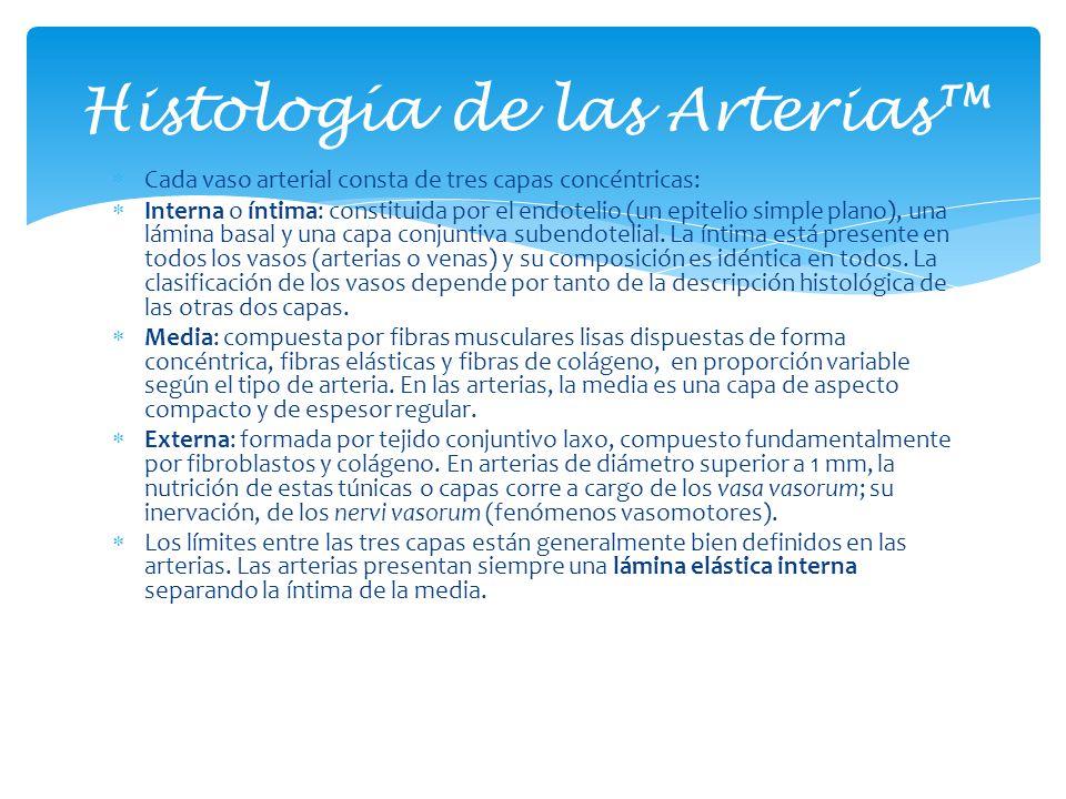 Histología de las Arterias™