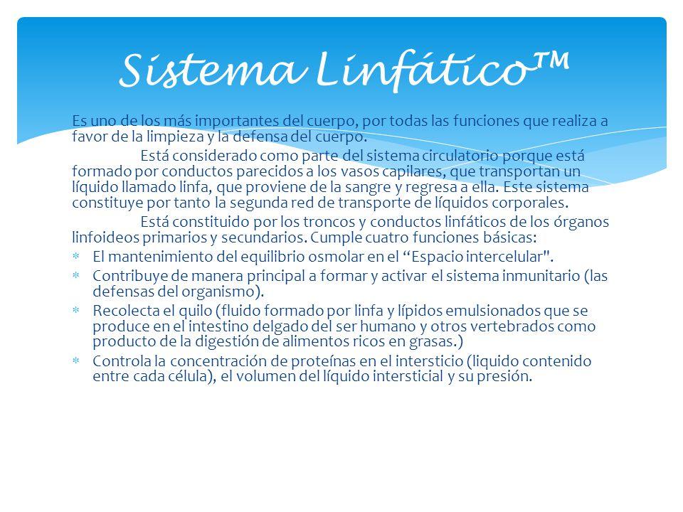 Sistema Linfático™ Es uno de los más importantes del cuerpo, por todas las funciones que realiza a favor de la limpieza y la defensa del cuerpo.