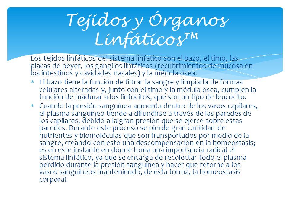 Tejidos y Órganos Linfáticos™