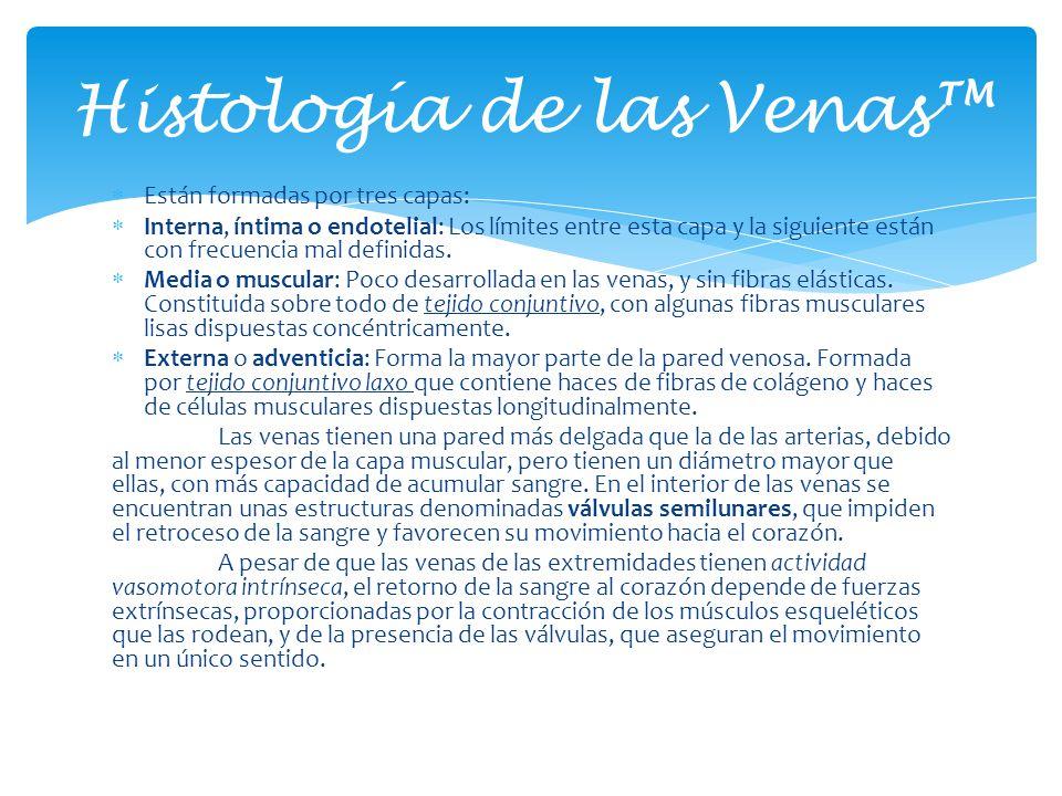 Histología de las Venas™