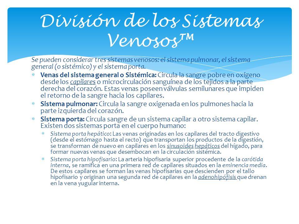 División de los Sistemas Venosos™