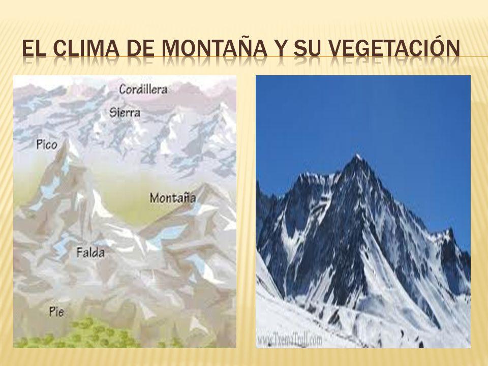 EL CLIMA DE MONTAÑA Y SU VEGETACIÓN