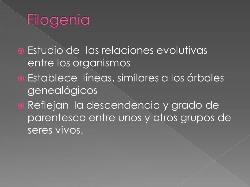 Filogenia Estudio de las relaciones evolutivas entre los organismos