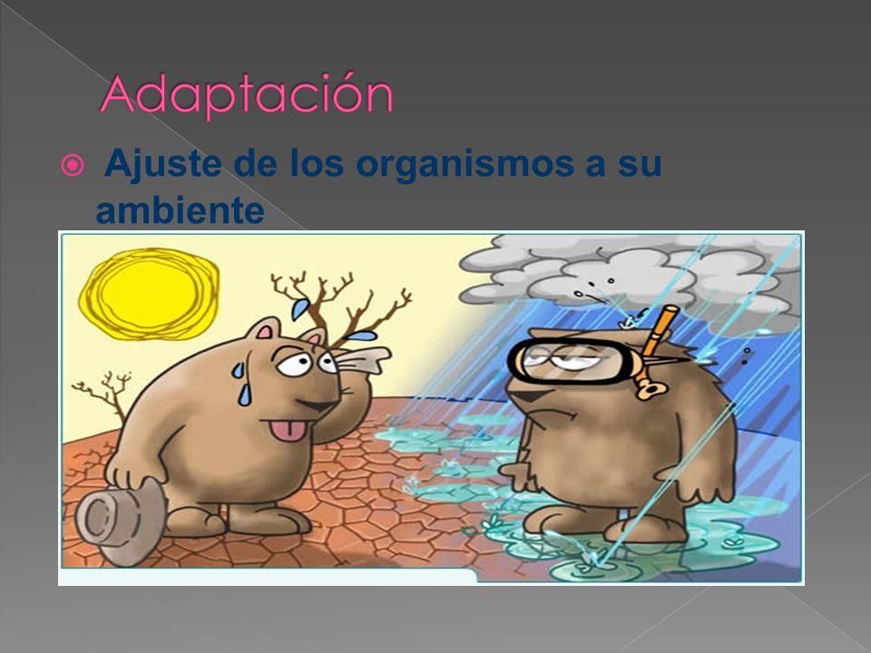 Adaptación Ajuste de los organismos a su ambiente
