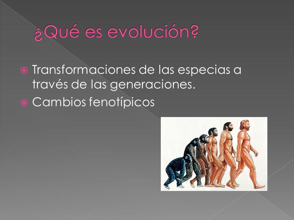 ¿Qué es evolución. Transformaciones de las especias a través de las generaciones.
