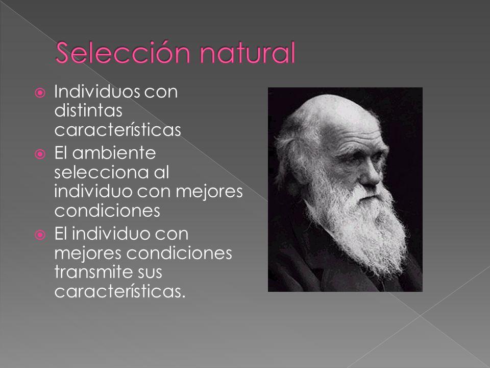 Selección natural Individuos con distintas características