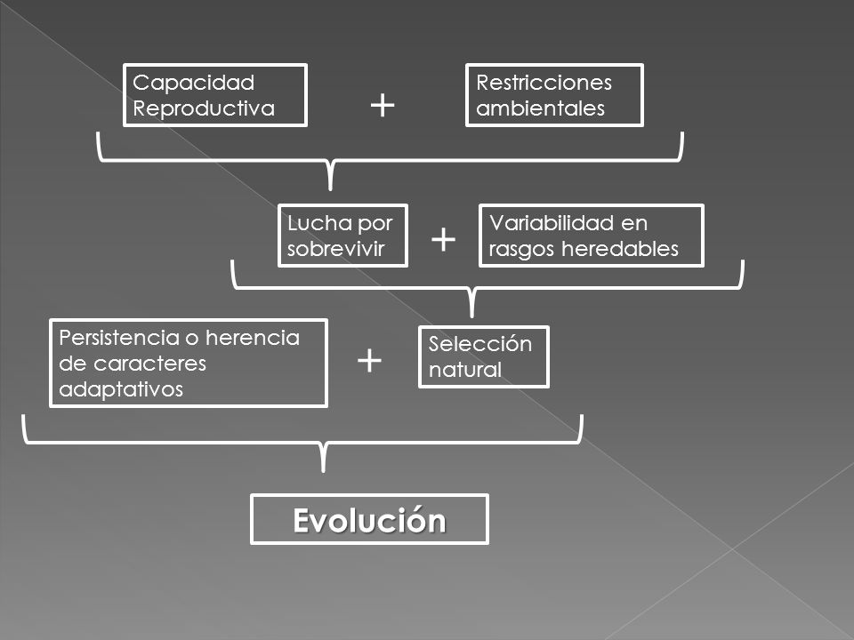 + + + Evolución Capacidad Reproductiva Restricciones ambientales
