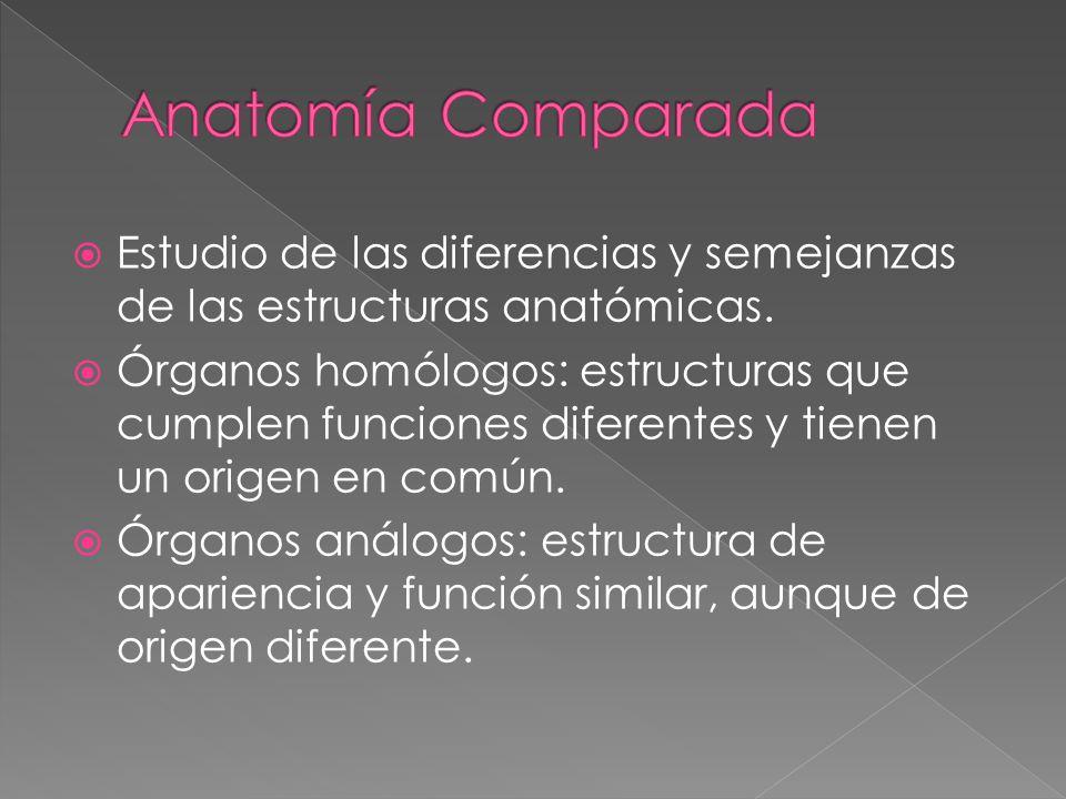 Anatomía Comparada Estudio de las diferencias y semejanzas de las estructuras anatómicas.