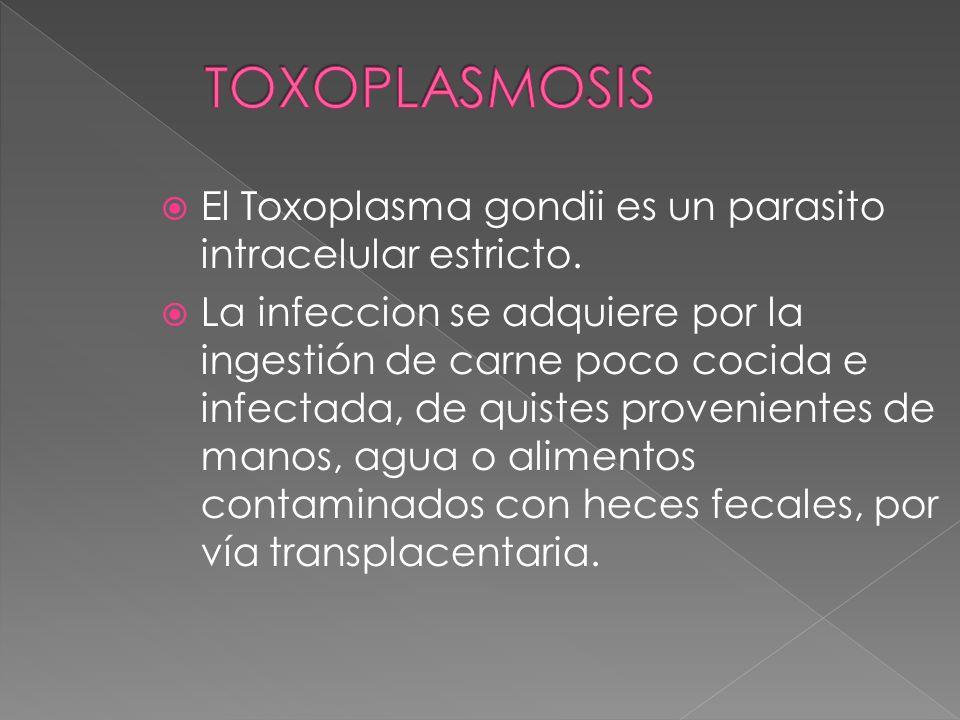 TOXOPLASMOSIS El Toxoplasma gondii es un parasito intracelular estricto.