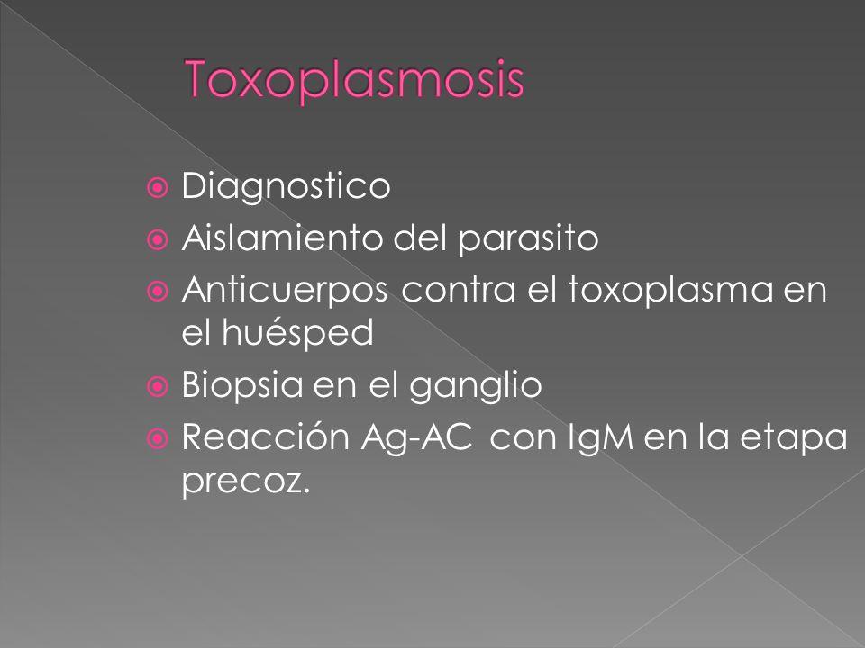 Toxoplasmosis Diagnostico Aislamiento del parasito
