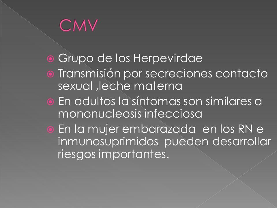 CMV Grupo de los Herpevirdae