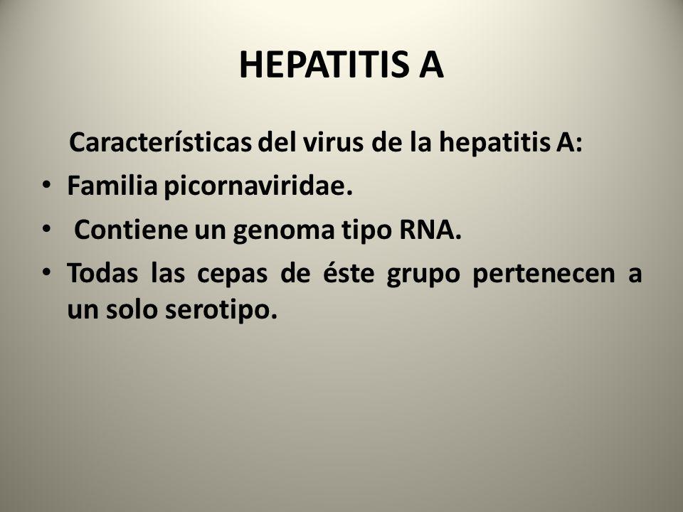 HEPATITIS A Características del virus de la hepatitis A: