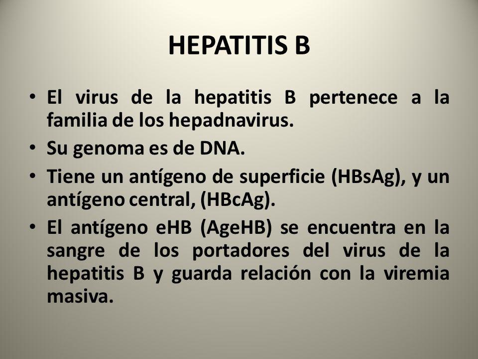 HEPATITIS B El virus de la hepatitis B pertenece a la familia de los hepadnavirus. Su genoma es de DNA.