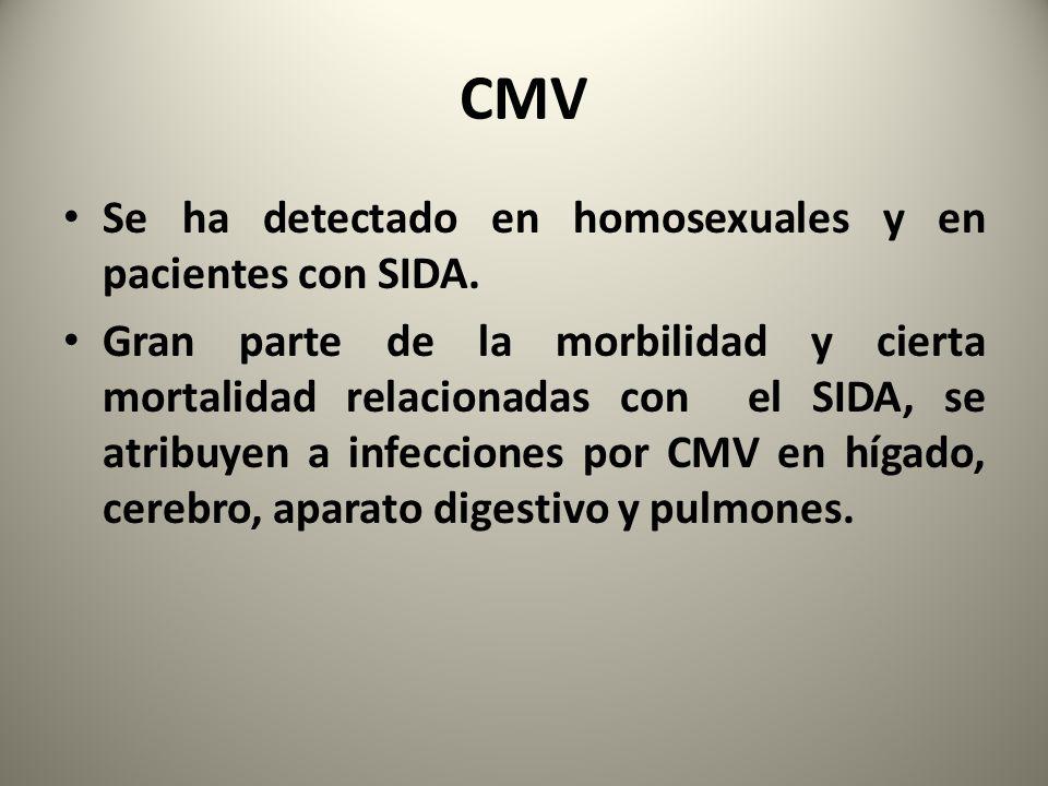CMV Se ha detectado en homosexuales y en pacientes con SIDA.